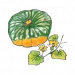pumpkin1510